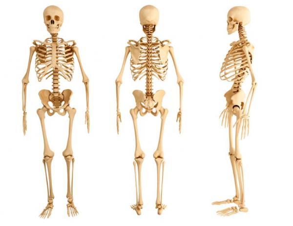 cuantos_huesos_tiene_el_cuerpo_humano_3485_600
